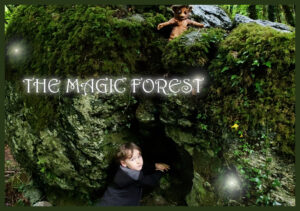 Clare Culture Night – The Magic Forest